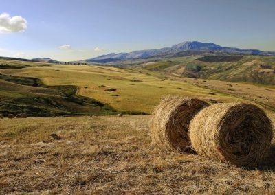 siaudai-italijos-laukuose
